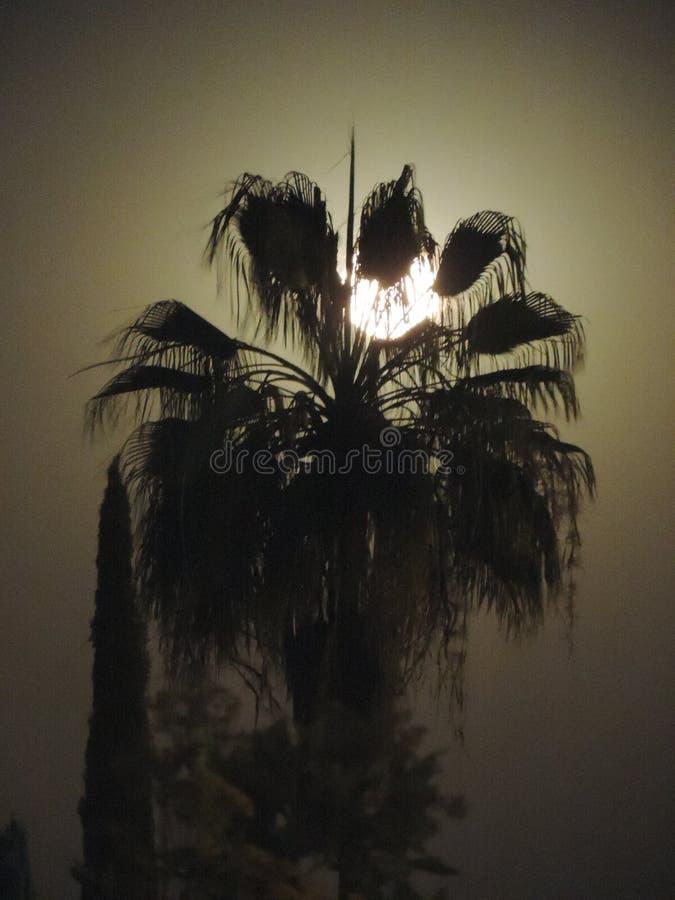 Luce di cielo della natura di notte della luna immagine stock libera da diritti