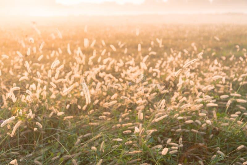 Luce di mattina nella campagna italiana fotografia stock