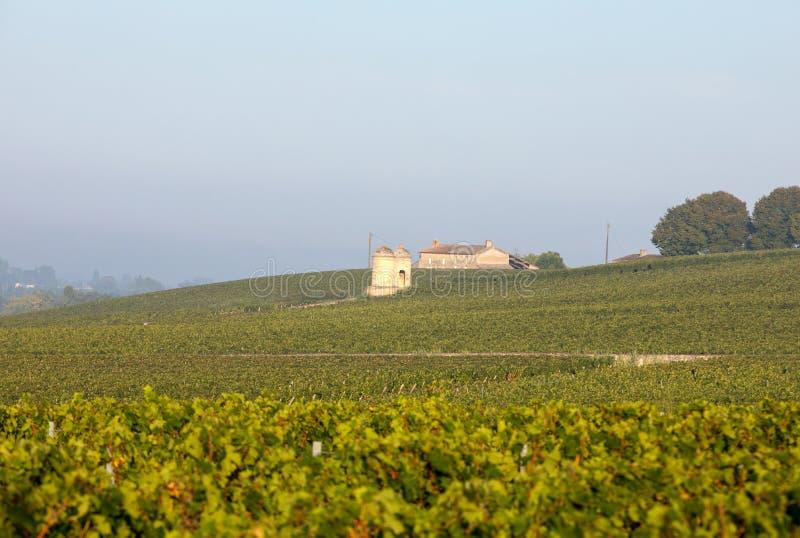 Luce di mattina nelle vigne del san Georges de Montagne vicino a Saint Emilion, Gironda, immagini stock libere da diritti
