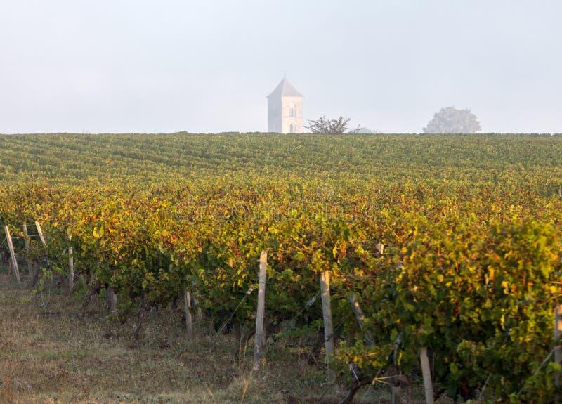 Luce di mattina nelle vigne del san Georges de Montagne vicino a Saint Emilion, immagini stock
