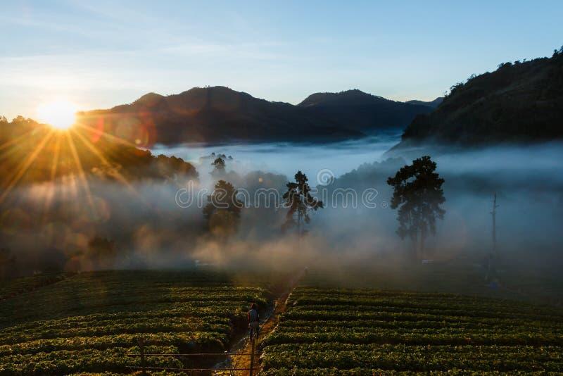 Luce di mattina, paesaggio, natura, punto di vista di mattina di Doi Ang Khang, Chiangmai fotografia stock