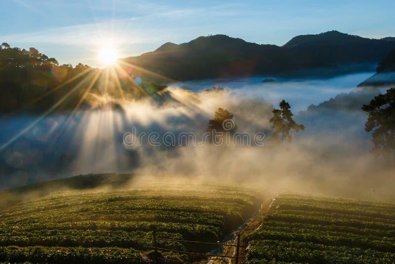 Luce di mattina, paesaggio, natura, punto di vista di mattina di Doi Ang Khang, Chiangmai fotografie stock libere da diritti