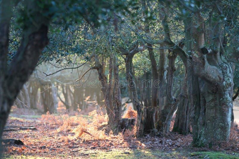 Luce nella nuova foresta, Regno Unito di autunno immagini stock libere da diritti