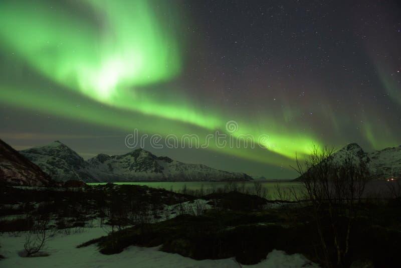 Luce nordica verde Aurora Borealis in una chiara notte stellata sopra un fiordo norvegese fotografia stock