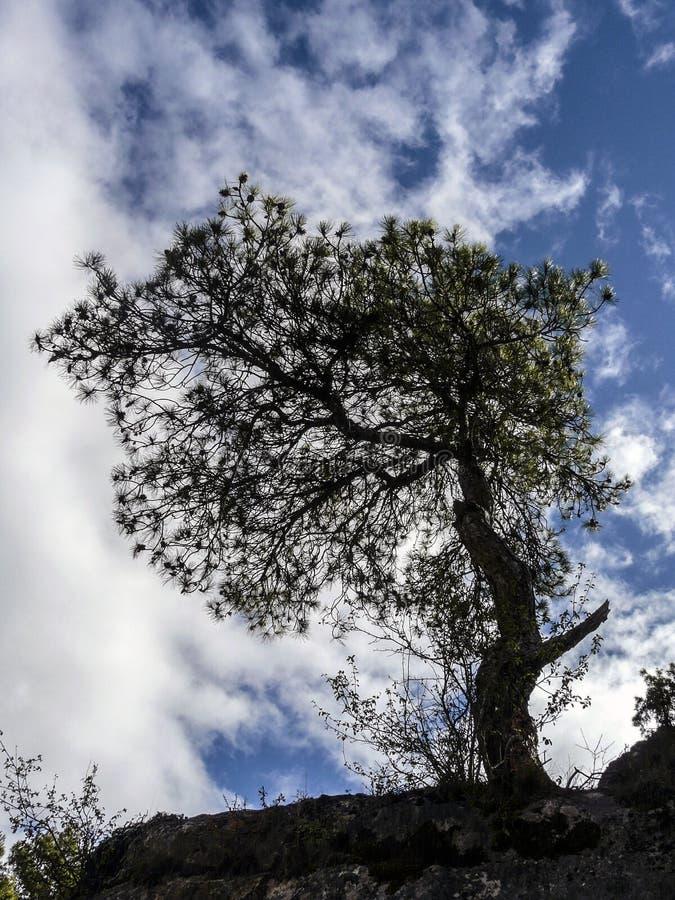 Luce posteriore di un albero immagine stock