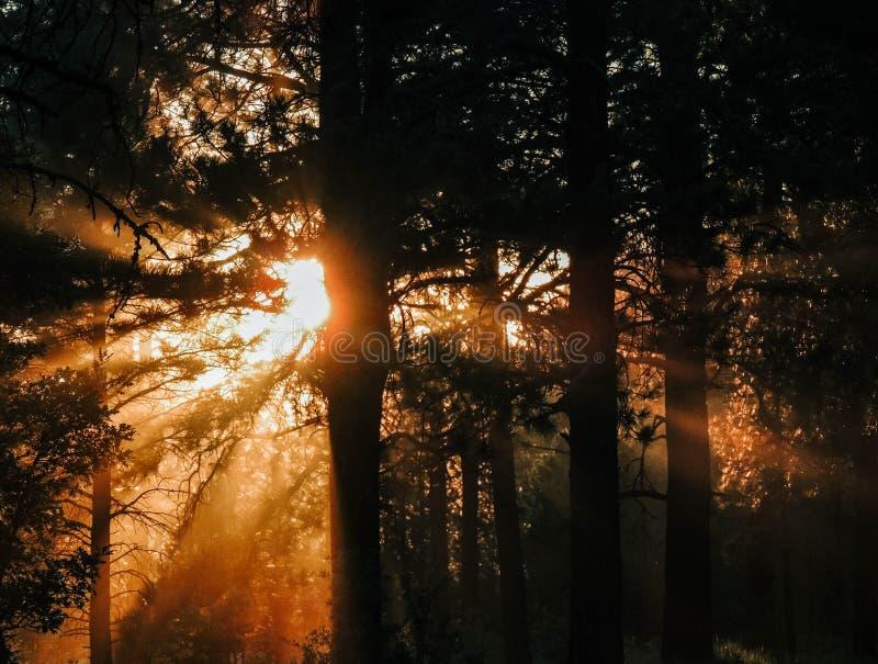 Luce solare attraverso gli alberi in foresta immagini stock