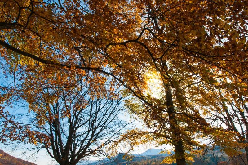Luce solare che attraversa gli alberi immagine stock libera da diritti