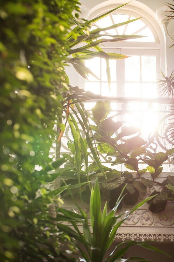 Luce solare che entra in serra immagine stock libera da diritti