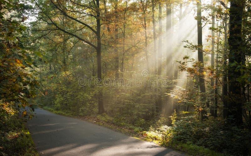 Luce solare che lucida attraverso gli alberi immagine stock