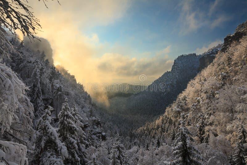 Luce solare che sbircia sugli alberi innevati fotografie stock