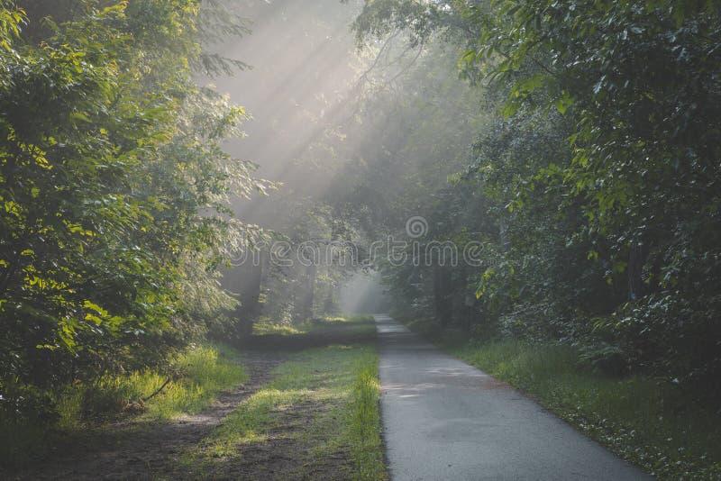 Luce solare che viene con gli alberi ed i termini nebbiosi nebbiosi sul percorso di camminata e di riciclaggio La porta de di Zon fotografie stock libere da diritti