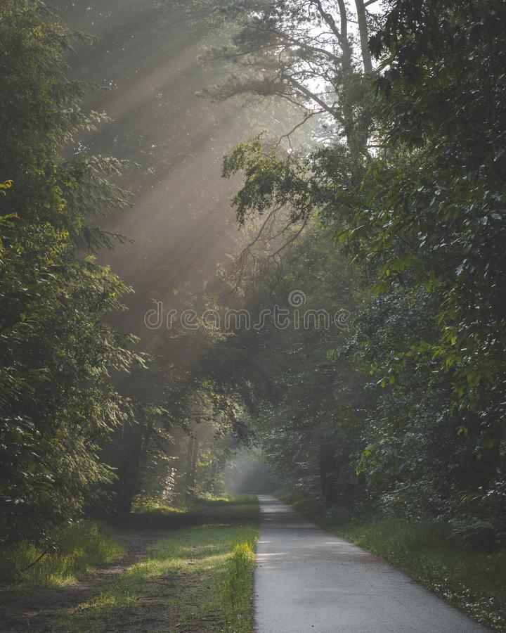 Luce solare che viene con gli alberi ed i termini nebbiosi nebbiosi sul percorso di camminata e di riciclaggio La porta de di Zon fotografia stock libera da diritti