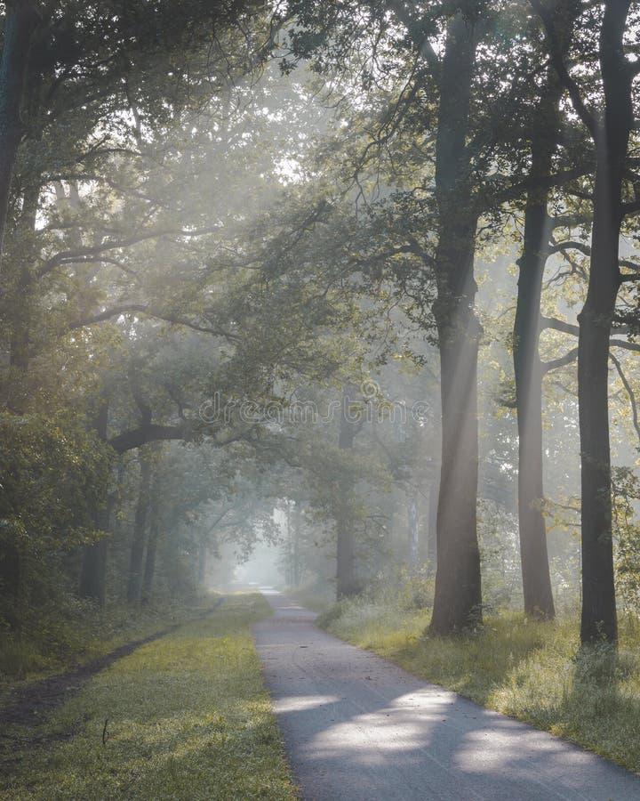 Luce solare che viene con gli alberi ed i termini nebbiosi nebbiosi sul percorso di camminata e di riciclaggio La porta de di Zon fotografia stock