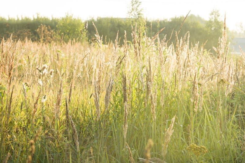 Luce solare dell'erba di autunno di mattina Paesaggio del paese fotografie stock