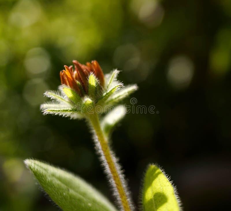 luce solare di estate della natura di giorno all'aperto del giardino del fiore del fondo del bokeh della foglia di verde del prim fotografie stock