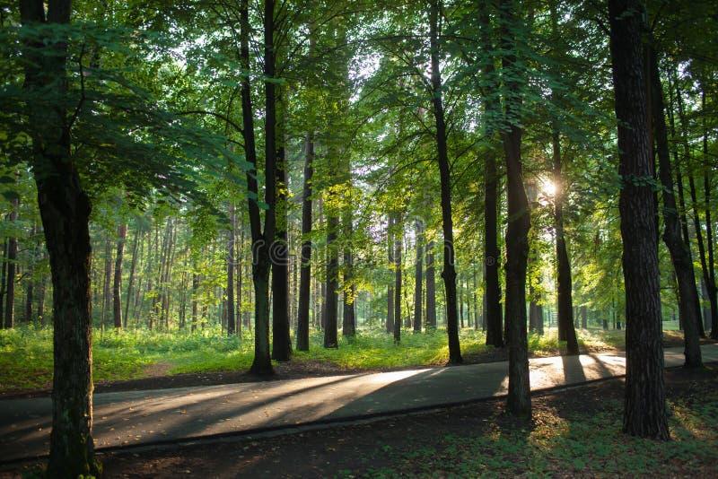Luce solare di fine dell'estate che attraversa gli alberi fotografia stock libera da diritti