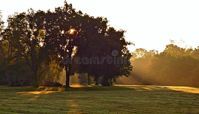 Luce solare di mattina che scorre da dietro un albero immagini stock libere da diritti