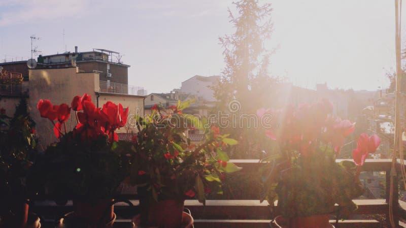 Luce solare di Padova fotografia stock libera da diritti