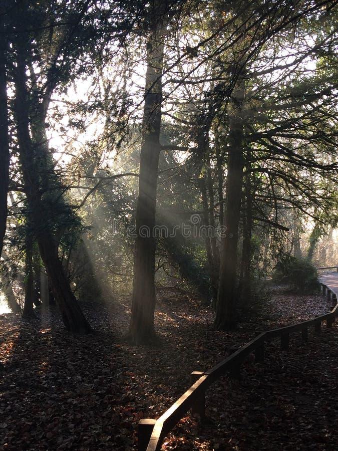 Luce solare ed alberi fotografia stock