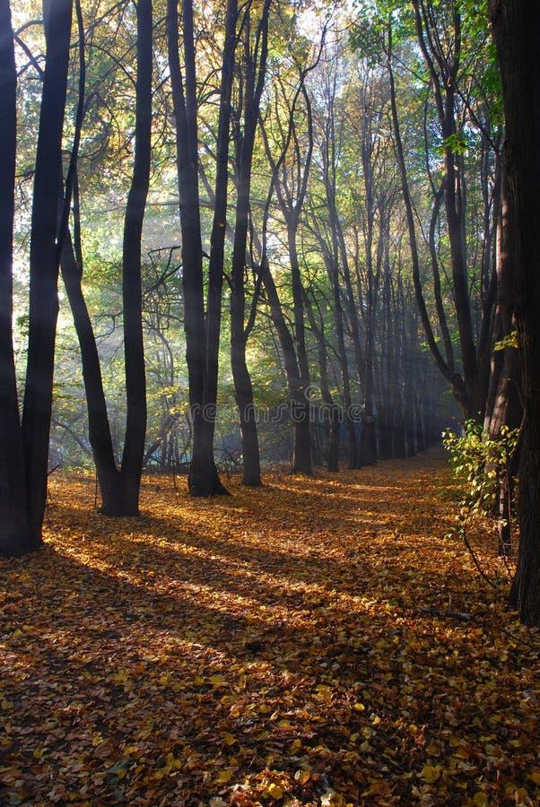 Luce solare in legno di autunno fotografie stock