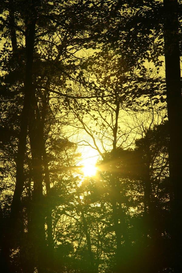 Luce solare misteriosa in una foresta olandese fotografia stock
