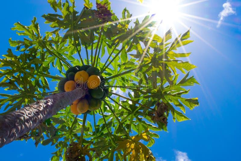 Luce solare richiesta fotografia stock libera da diritti