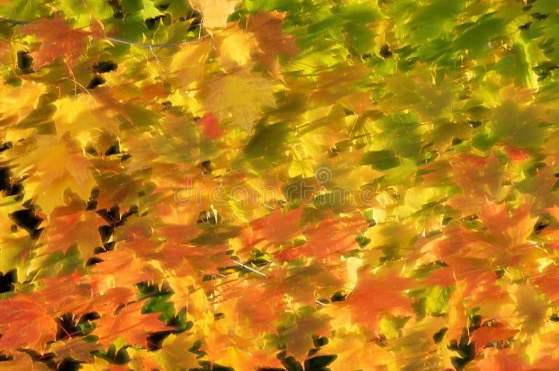 Luce solare sui fogli di autunno ventilati fotografia stock