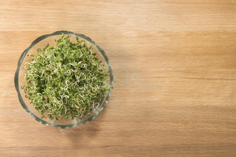 Lucerne alfalfa in glass bowl on wooden background. nutrition. food ingredient stock photo
