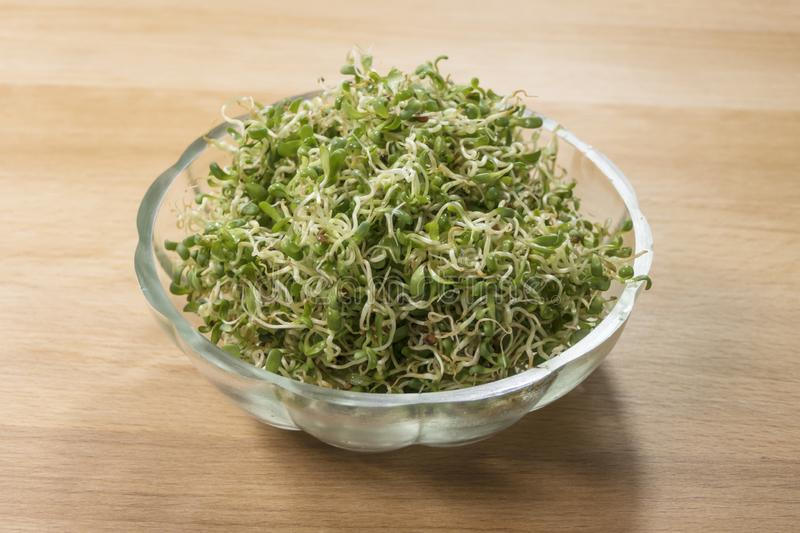 Lucerne alfalfa in glass bowl on wooden background. nutrition. food ingredient stock photos