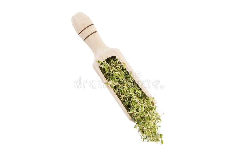Lucerne alfalfa sprouts in wooden scoop isolated on white background. nutrition. bio. natural food ingredient royalty free stock photography