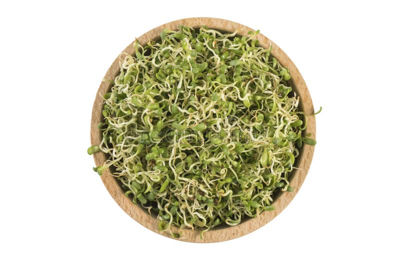 Lucerne alfalfa in wooden bowl isolated on white background. nutrition. food ingredient royalty free stock photos
