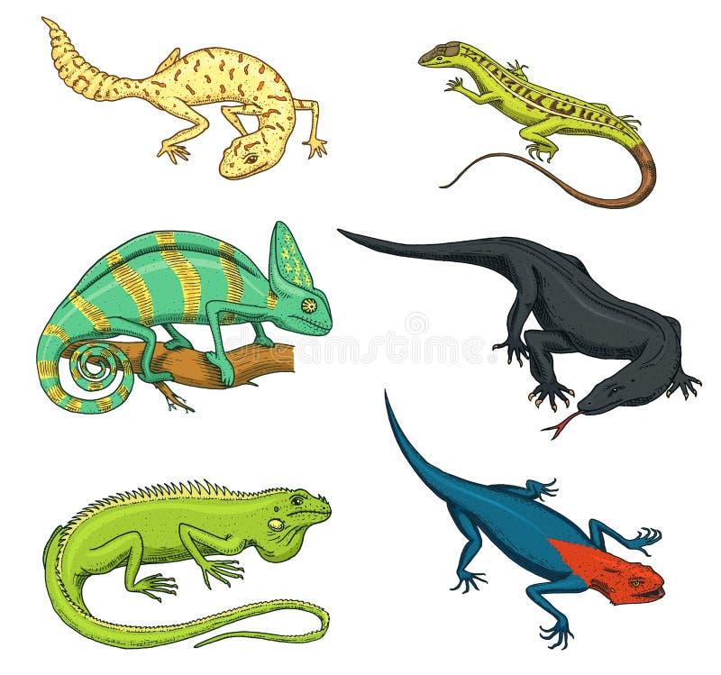 Lucertola del camaleonte, iguana verde, monitor del drago di Komodo, sabbia americana, rettili esotici o serpenti, macchiati a co royalty illustrazione gratis