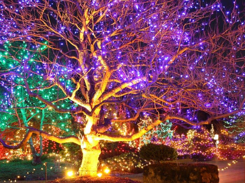 Jardín de la fantasía imagen de archivo libre de regalías