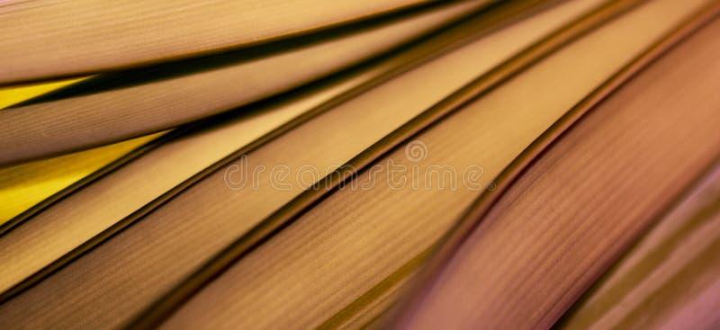 Luces coloridas y formas abstractas la hoja foto de archivo