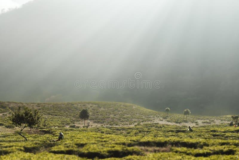 Luces de la mañana en la montaña imagen de archivo libre de regalías
