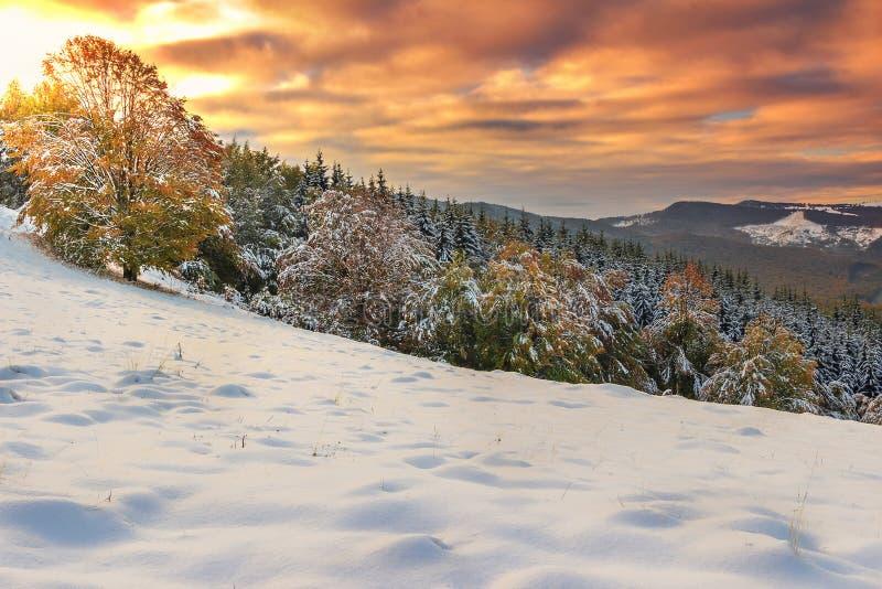 Luces de la mañana y panorama hermosos del invierno, Cárpatos, Transilvania, Rumania imagenes de archivo