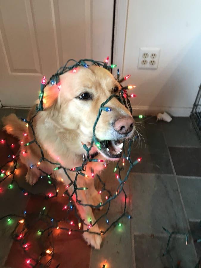 Luces de la Navidad del perro foto de archivo