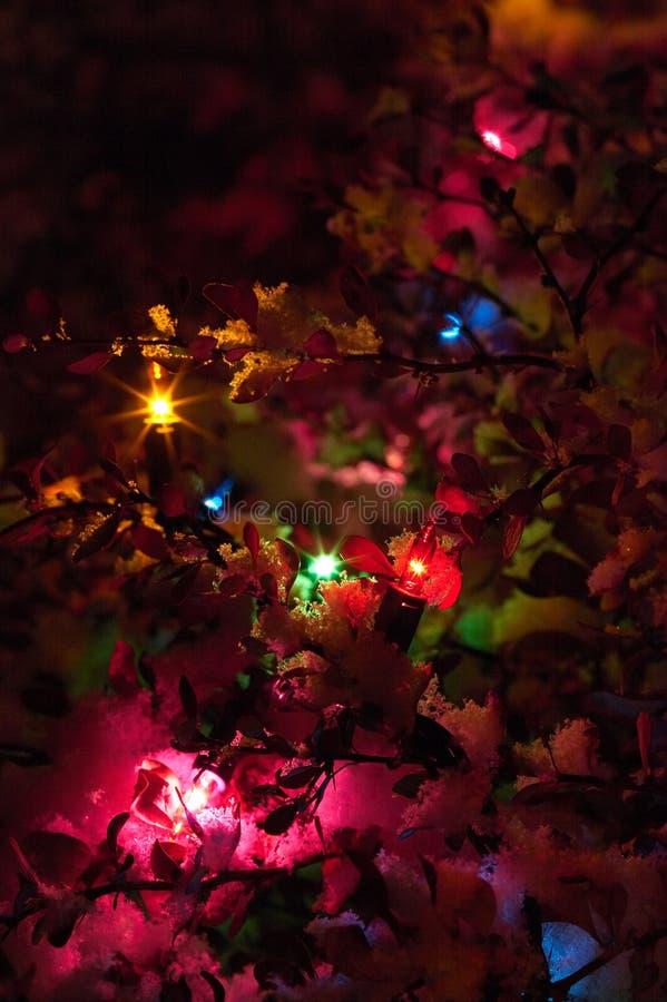 Luces de la Navidad en nieve fotografía de archivo