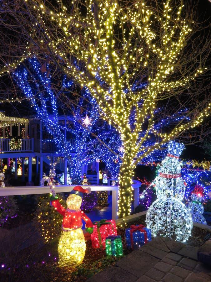Luces del azul y del oro de la Navidad en los árboles en Maryland foto de archivo