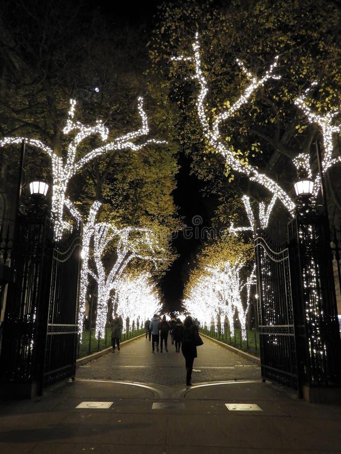 Luces del invierno del día de fiesta en la calzada alineada árbol fotografía de archivo