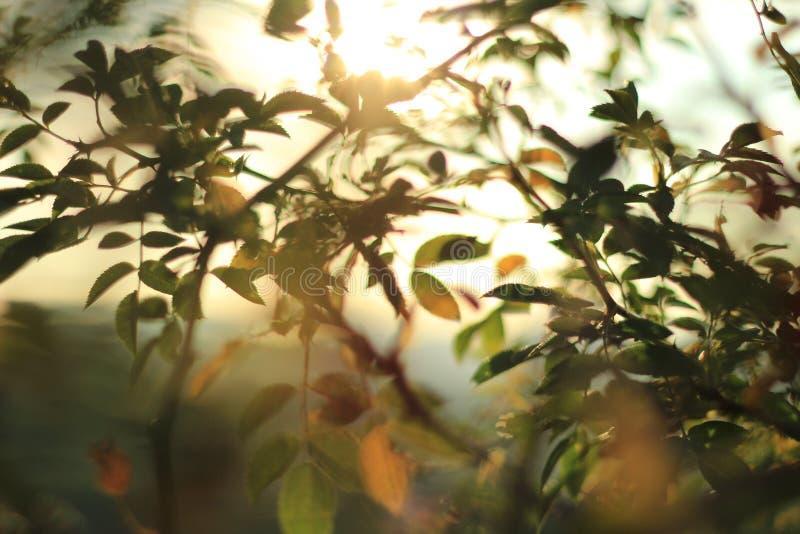Luces del verano imagenes de archivo