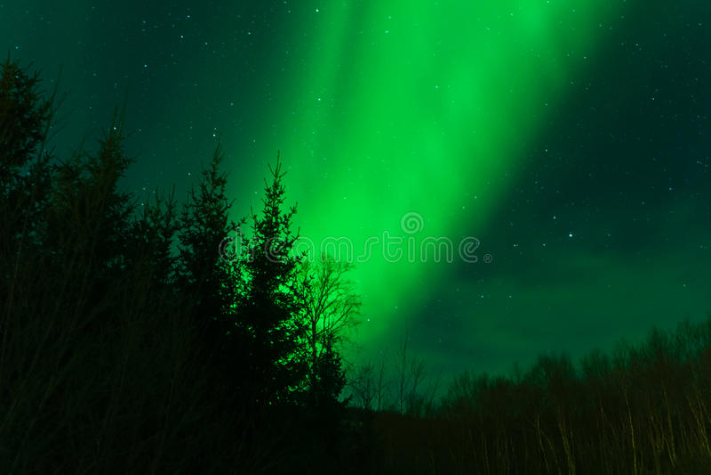 Luces norteñas detrás de un bosque fotos de archivo
