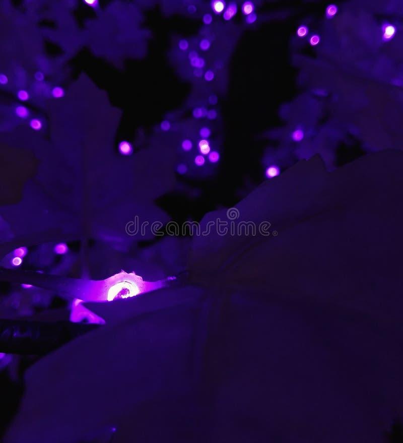 Luces púrpuras fotos de archivo libres de regalías