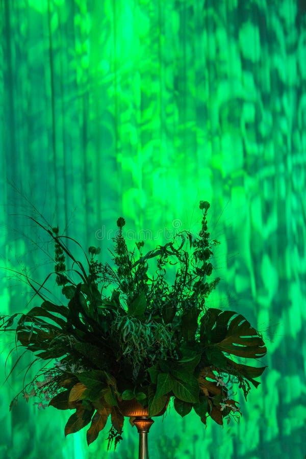 Luces verdes en la cortina con la pieza central hermosa de la planta fotografía de archivo