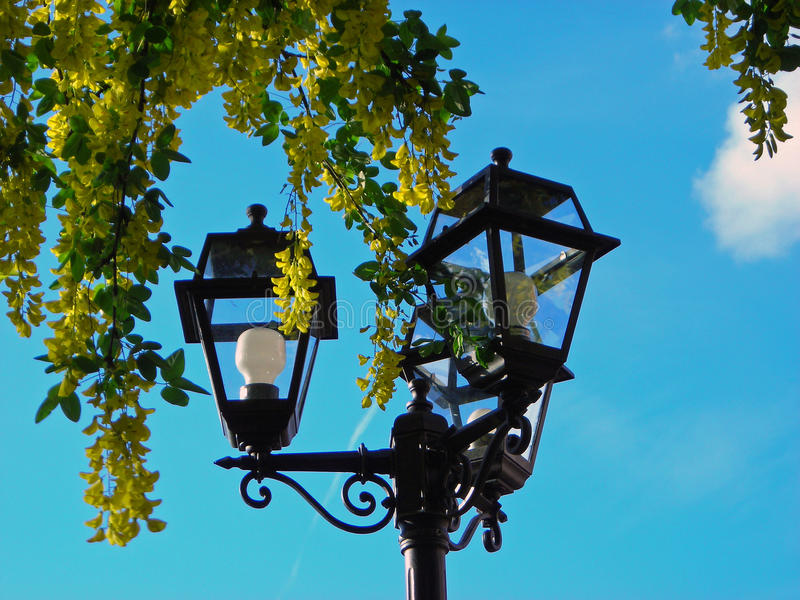 Luces y árbol foto de archivo