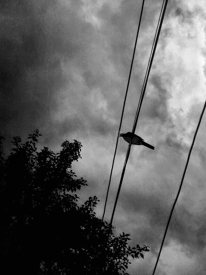 Luchas del pájaro cuando aparecen las nubes foto de archivo libre de regalías