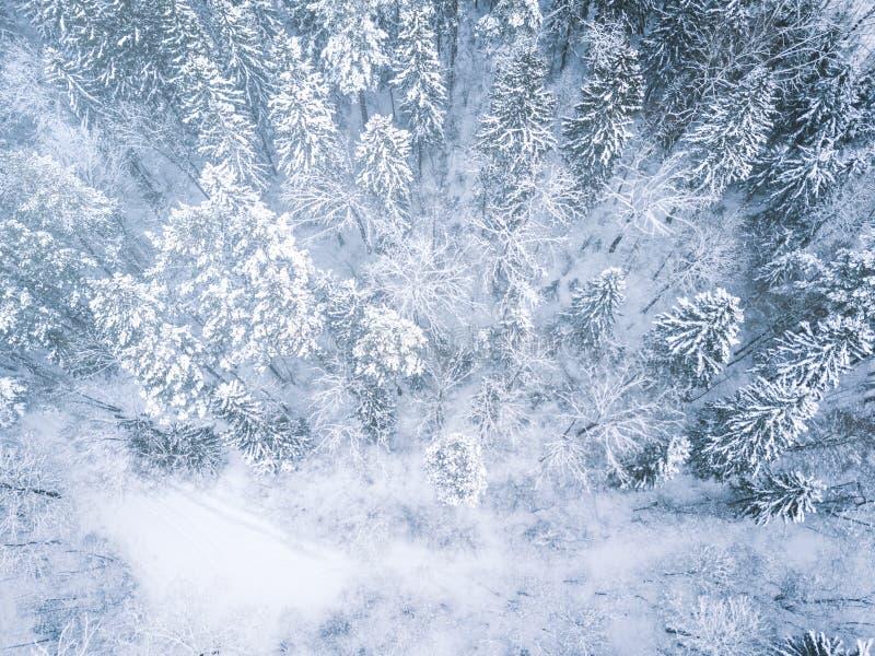 Lucht de winter bosmening Hommellandschap, vlieg hierboven Witte bomen met sneeuw, mooie behangachtergrond Hoge moderne photogra stock afbeeldingen