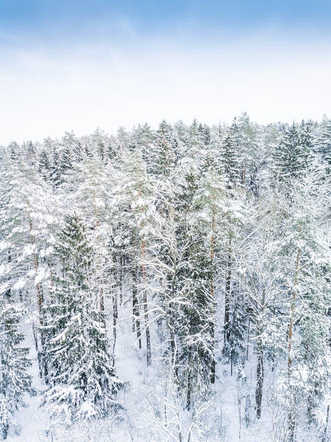 Lucht de winter bosmening Hommellandschap, vlieg hierboven Witte bomen met sneeuw, mooie behangachtergrond Hoge moderne photogra stock fotografie