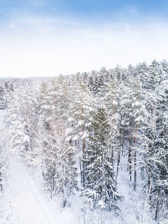 Lucht de winter bosmening Hommellandschap, vlieg hierboven Witte bomen met sneeuw, mooie behangachtergrond Hoge photogra stock afbeelding