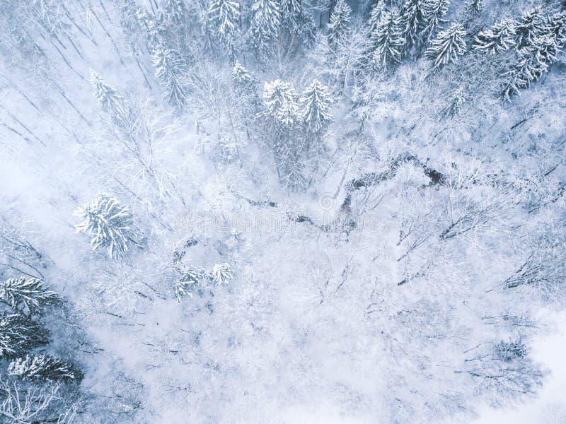 Lucht de winter bosmening Hommellandschap Witte bomen met sneeuwachtergrond Hoge moderne photogra royalty-vrije stock foto